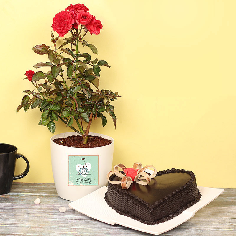 Cake with Red Rose Plant in Vase