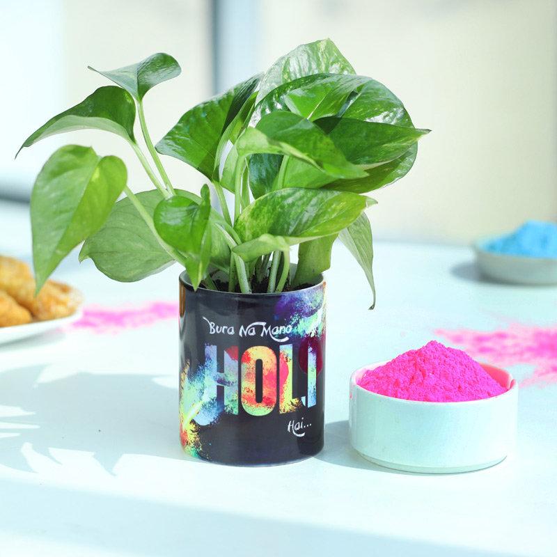 Holi Money Plant