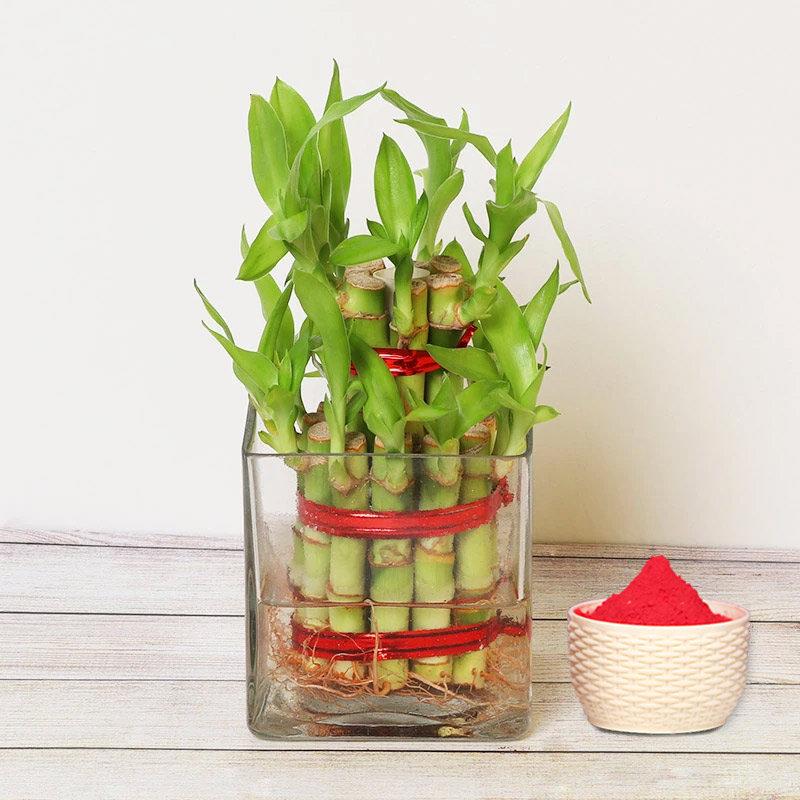Holi Combo of 2 Layer Lucky Bamboo and Gulal