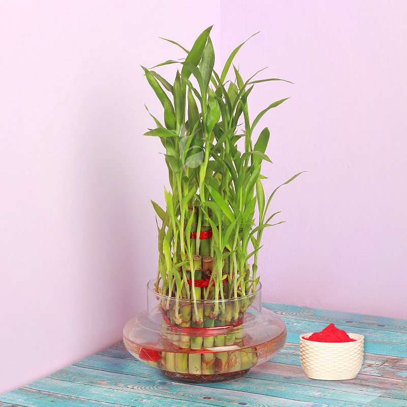 Triple Layer Bamboo with Gulal Holi Combo