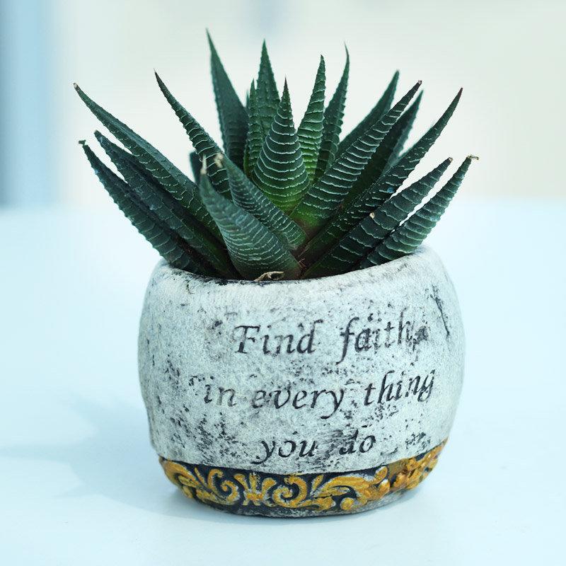 Hopeful Haworthia - Succulent and Cactus Plant Indoors in White Gold Faith Vase