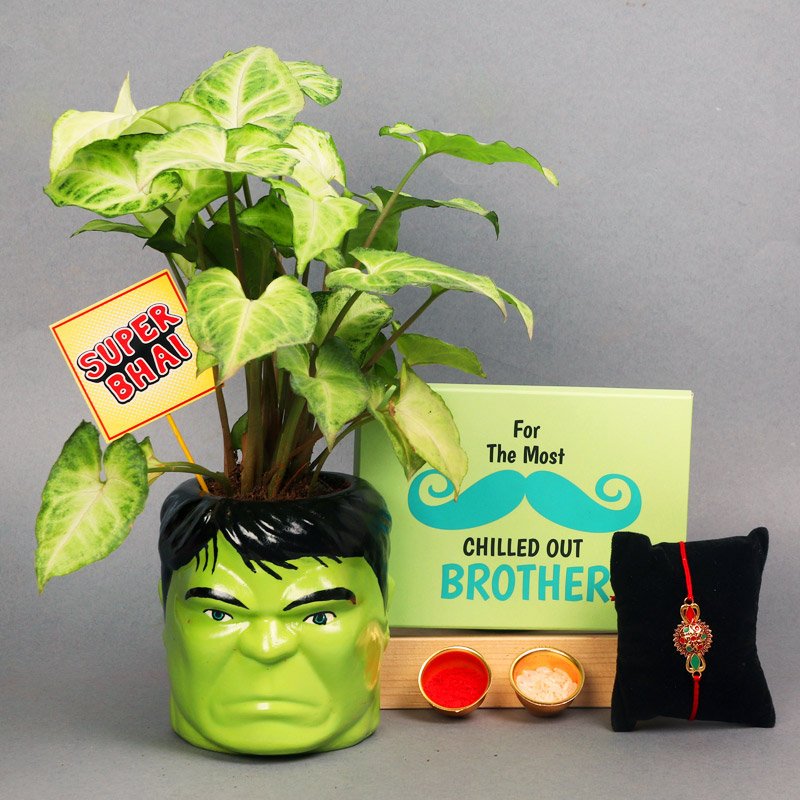Hulk Syngonium Plant With Rakhi