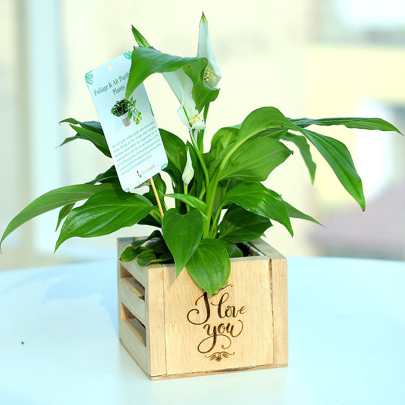 Hybrid Peace Lily Plant - Air Purifying Plant Indoors in I Love You Engrave Vase and Mini Buddha