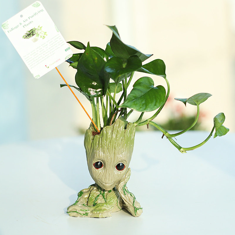 Money Plant in Sitting Groot