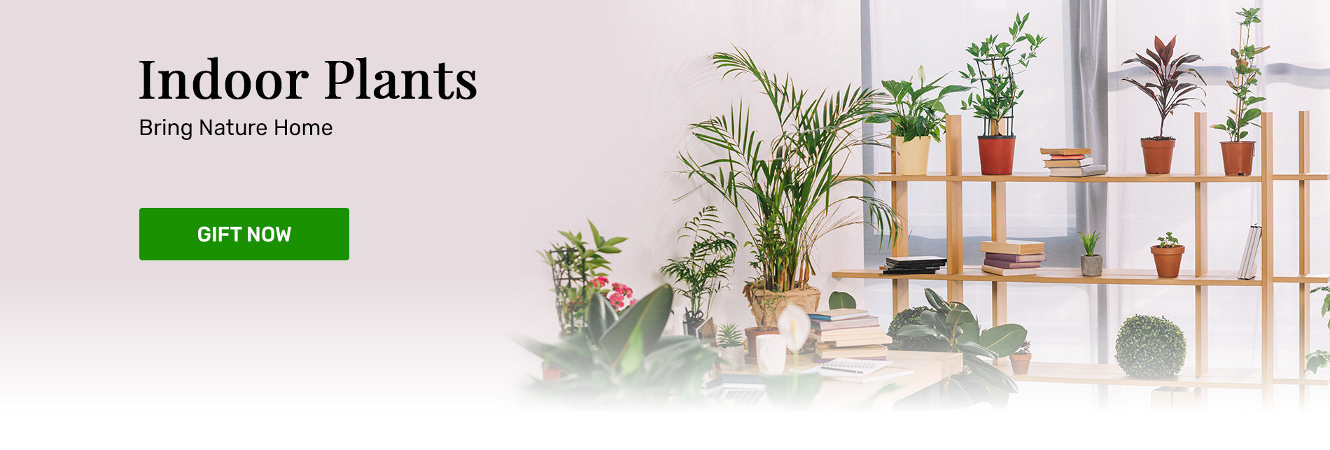 Indoor Plants for Home and Offices