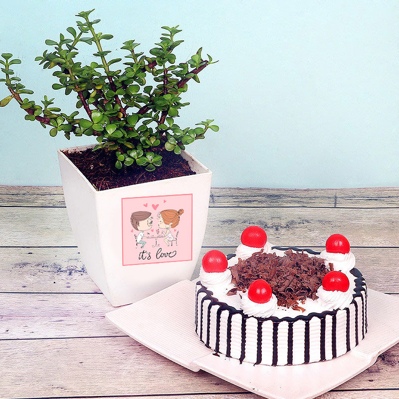 V-Day Black Forest Cake and Jade Plant Combo Gift