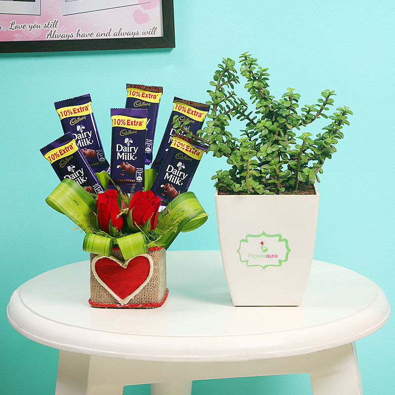 Jade Choco Plant Combo - Foliage Plant Indoors in Floweraura Chatura Vase and 5 Dairy Milk Chocolates with 2 Red Roses