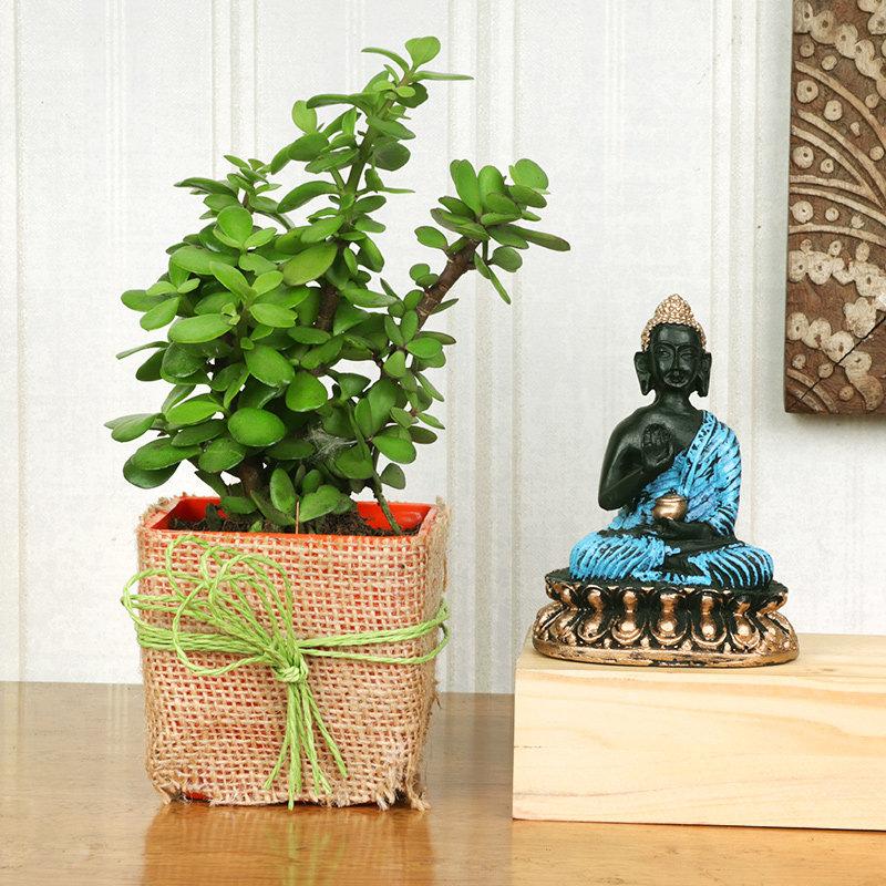 Jade Plant Gift Combo