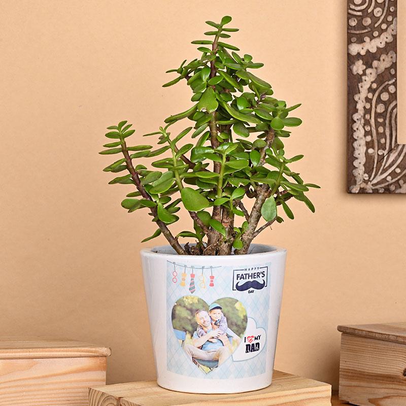 Jade Plant in Personalised Vase for Dad