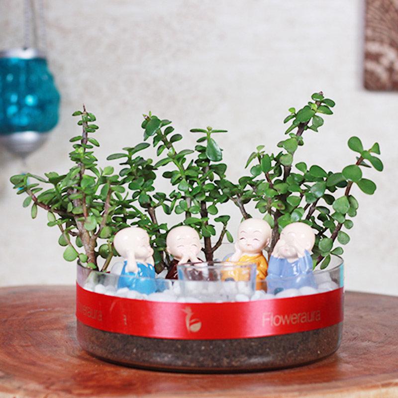 Jade Plant In Beautiful Glass Vase