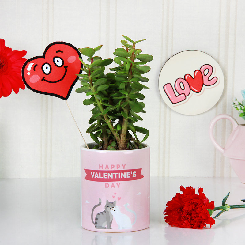 Jade Plant N Mug Combo