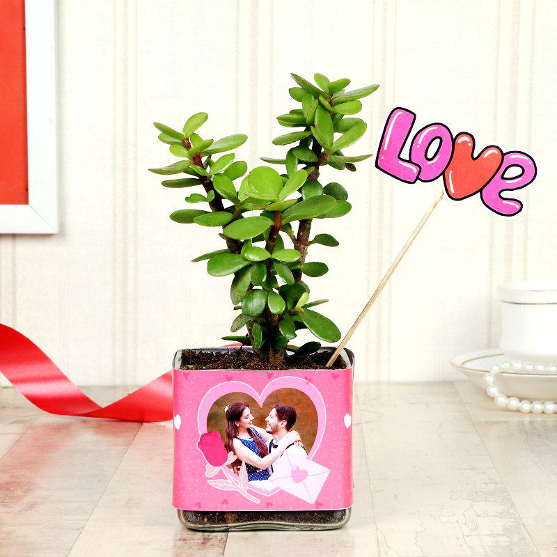 Jade Plant With Customized Planter