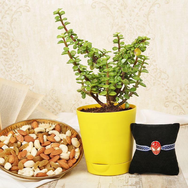 Jade Rakhi Nuts Combo