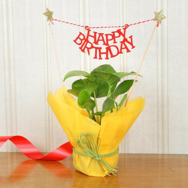 Jute Money Birthday Plant