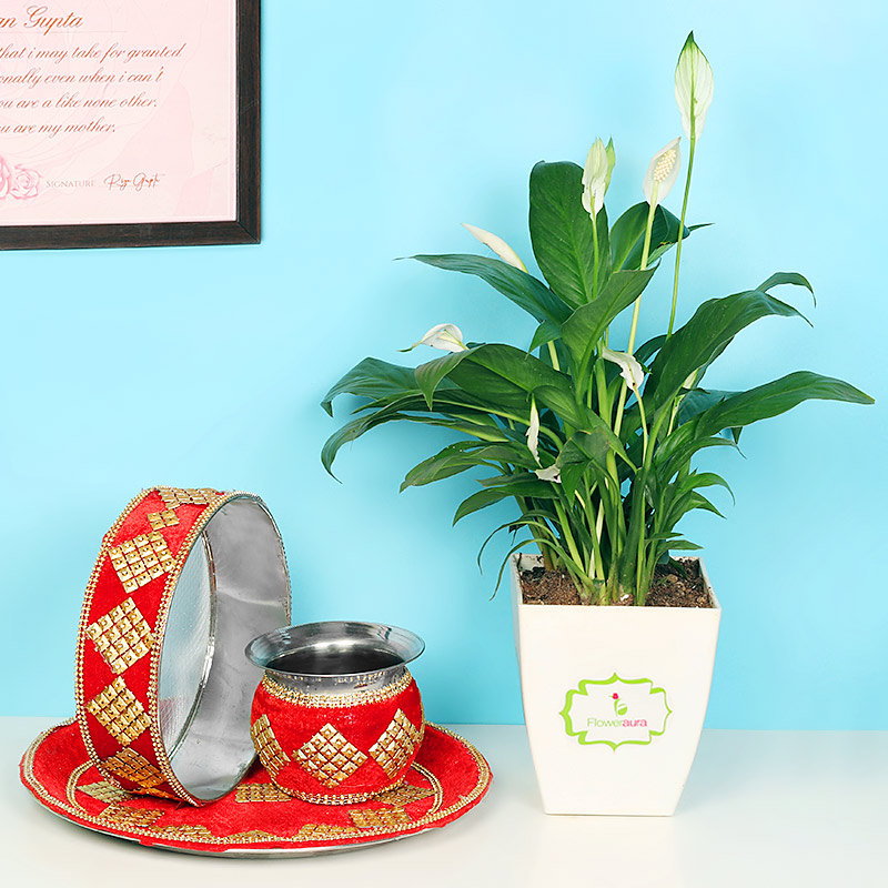 Karwa Chauth Peace Lily Plant Combo