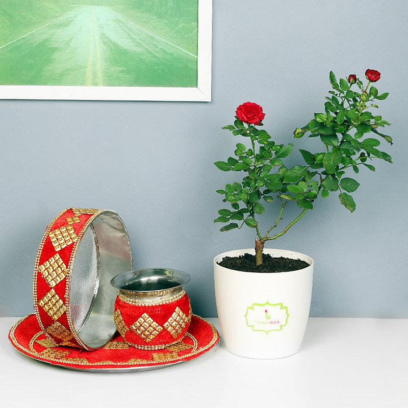 Karwa Chauth Rose Plant Combo