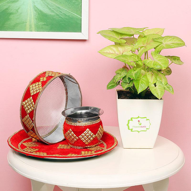 Karwa Chauth Syngonium Plant Combo