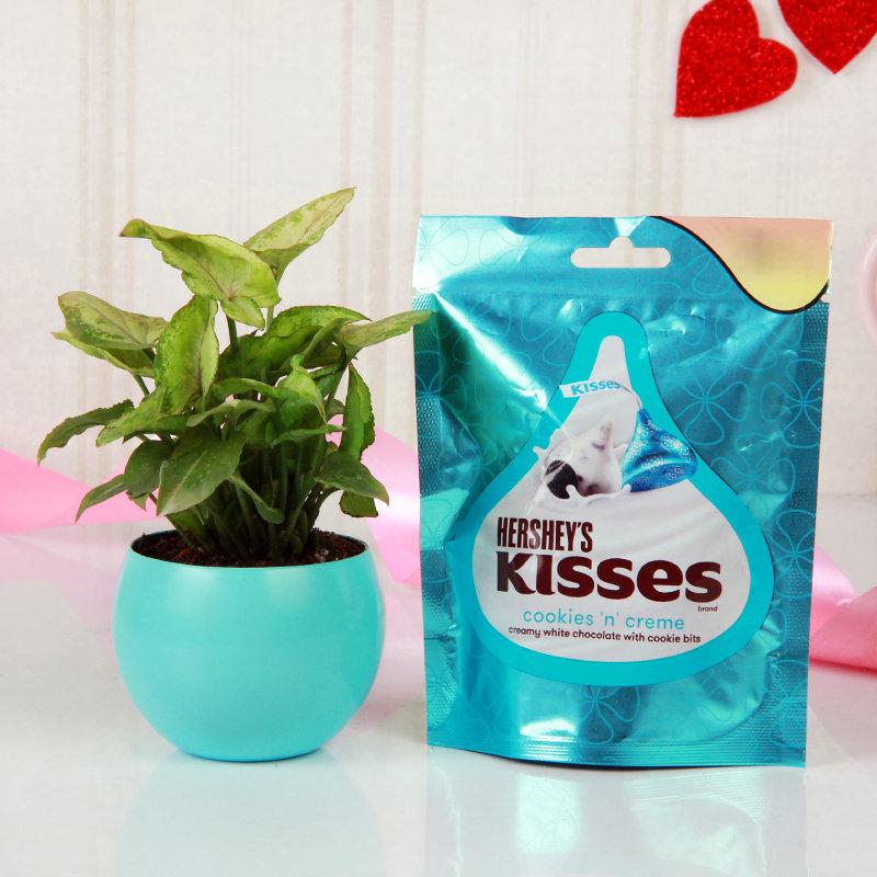 Kiss N Care Of Love