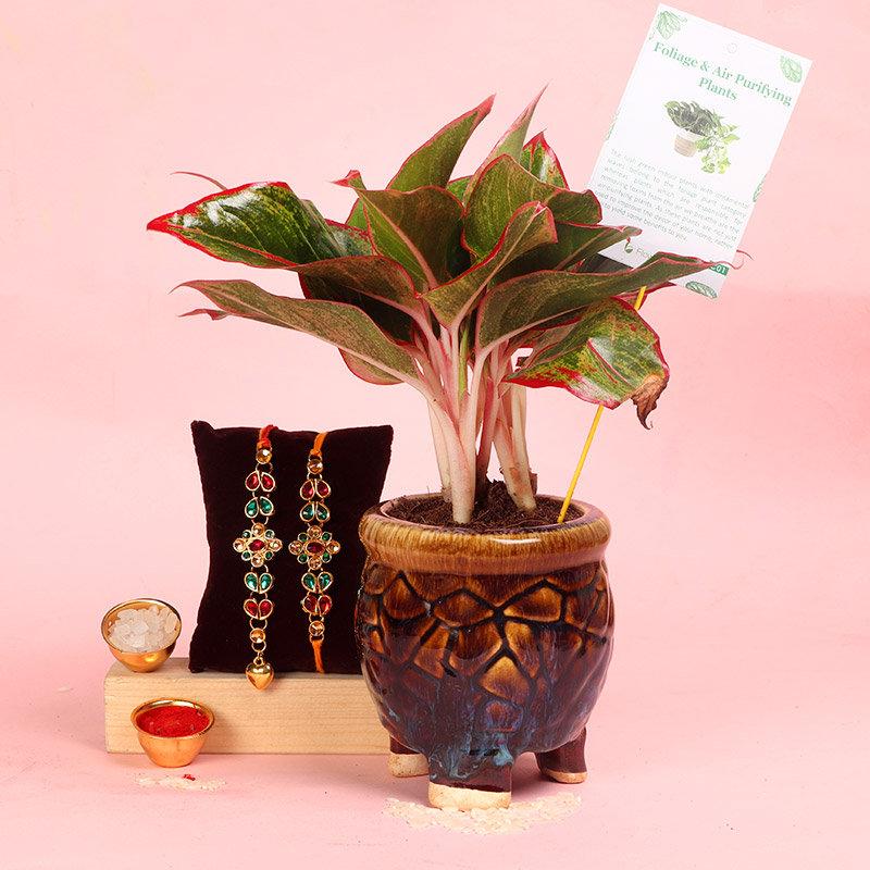 Kundan Aglaonema Rakhi Combo - Set of Bhaiya Bhabhi Rakhi with Flowering Plants in in Three Leg Antique Vase