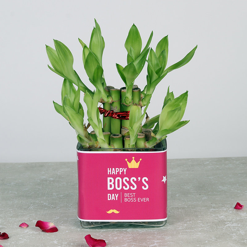 Layered Happy Bamboo For Boss