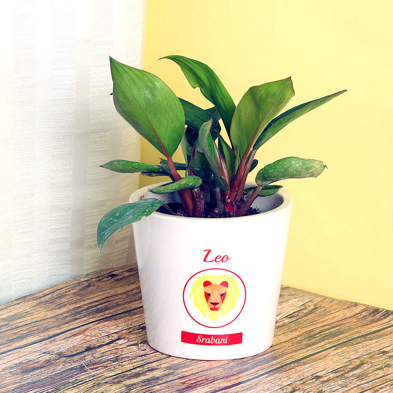 Red Philodendron Plant in Personalised Vase for Leo People