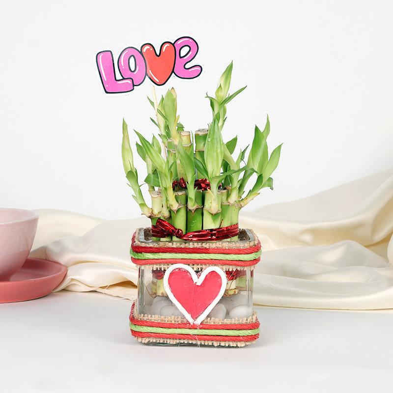 Love Bamboo Plant