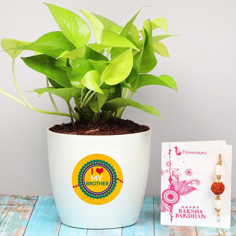 Love Bro Money Rakhi Plant