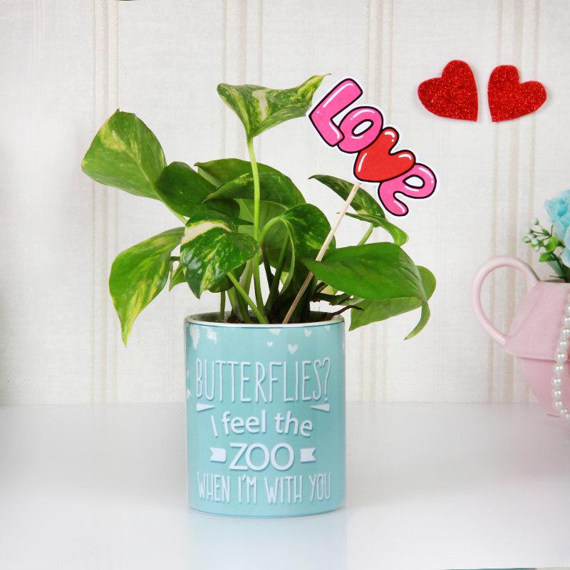 Love Is My Money Plant