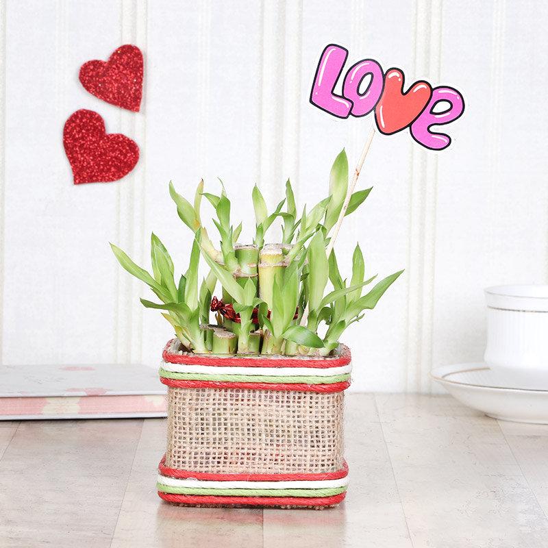 Love Layer Bamboo