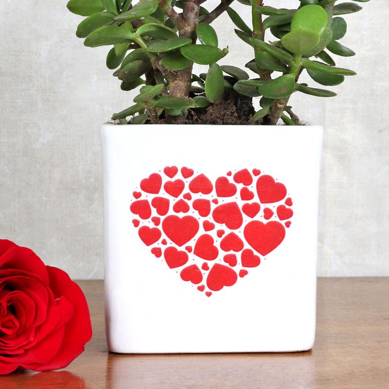 Lovely Vday Plant Gift