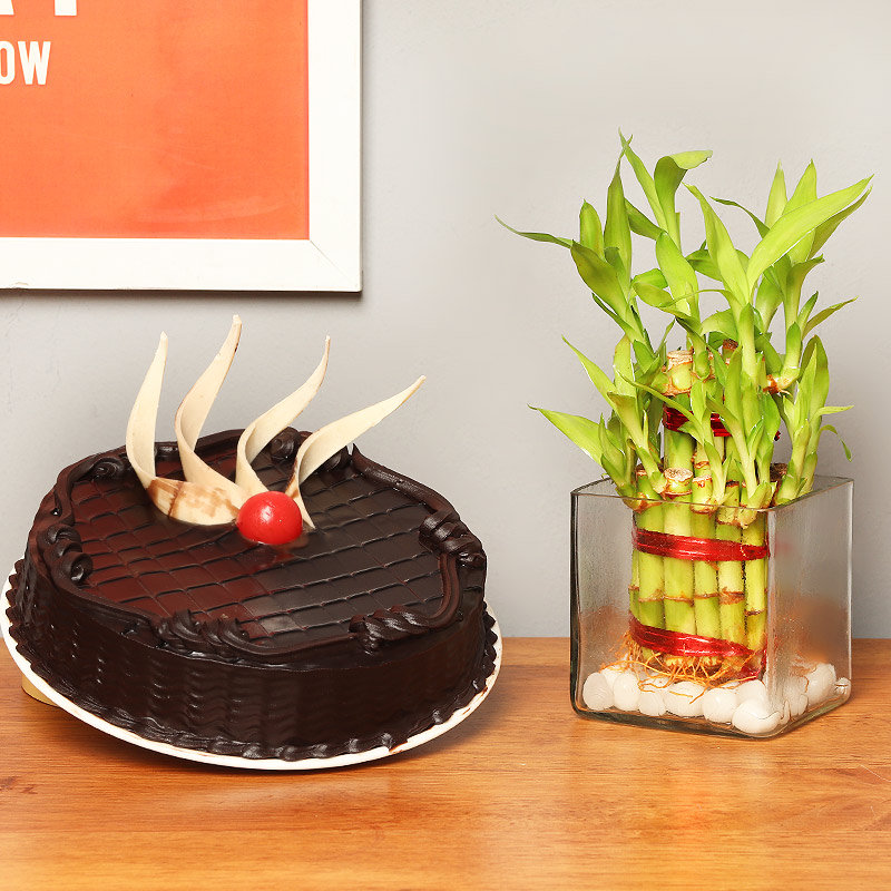 2 Layer Bamboo with Chocolate Cake Combo
