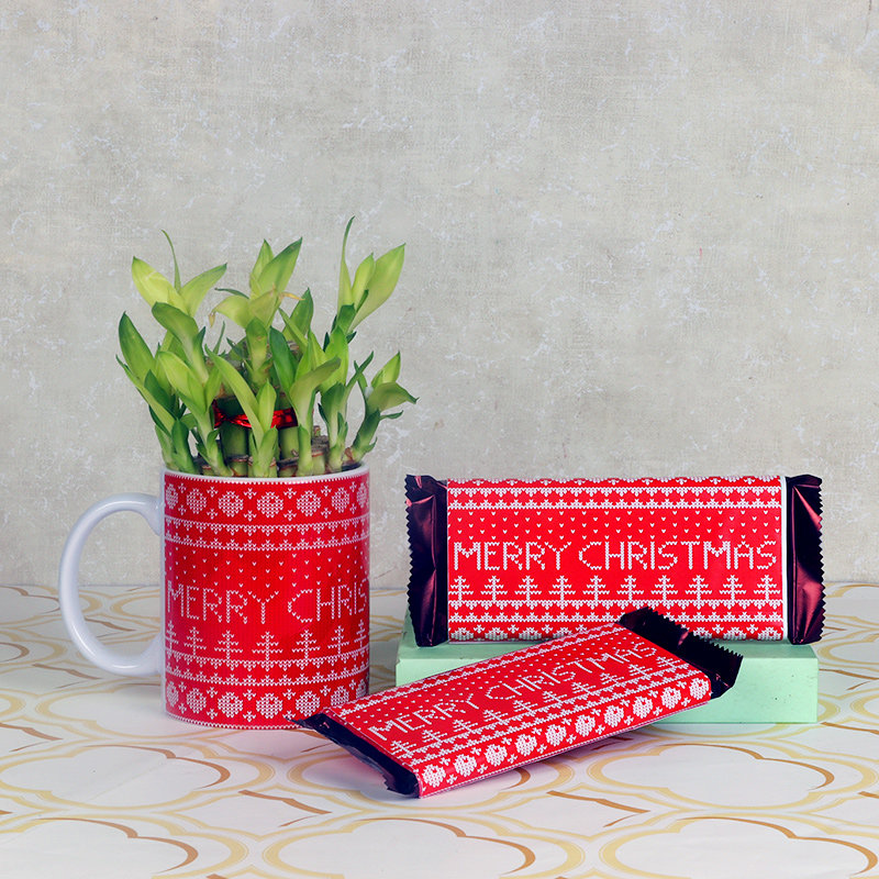 Xmas Gift Combo of Lucky Bamboo and Chocolates