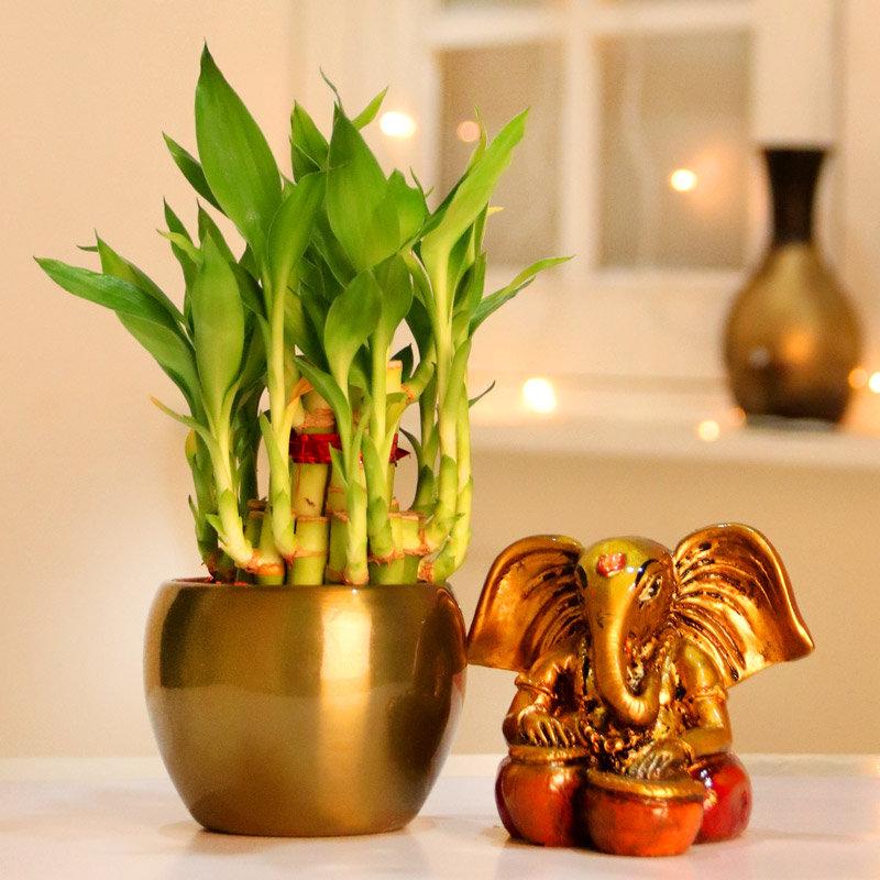 Lucky Bamboo and Ganesha Idol Combo