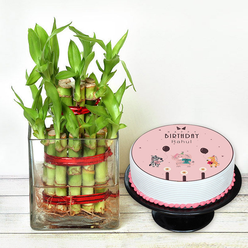 Lucky Bamboo N Cake Combo