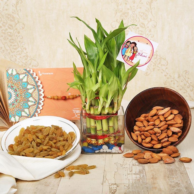 Lucky Bamboo Rakhi Combo