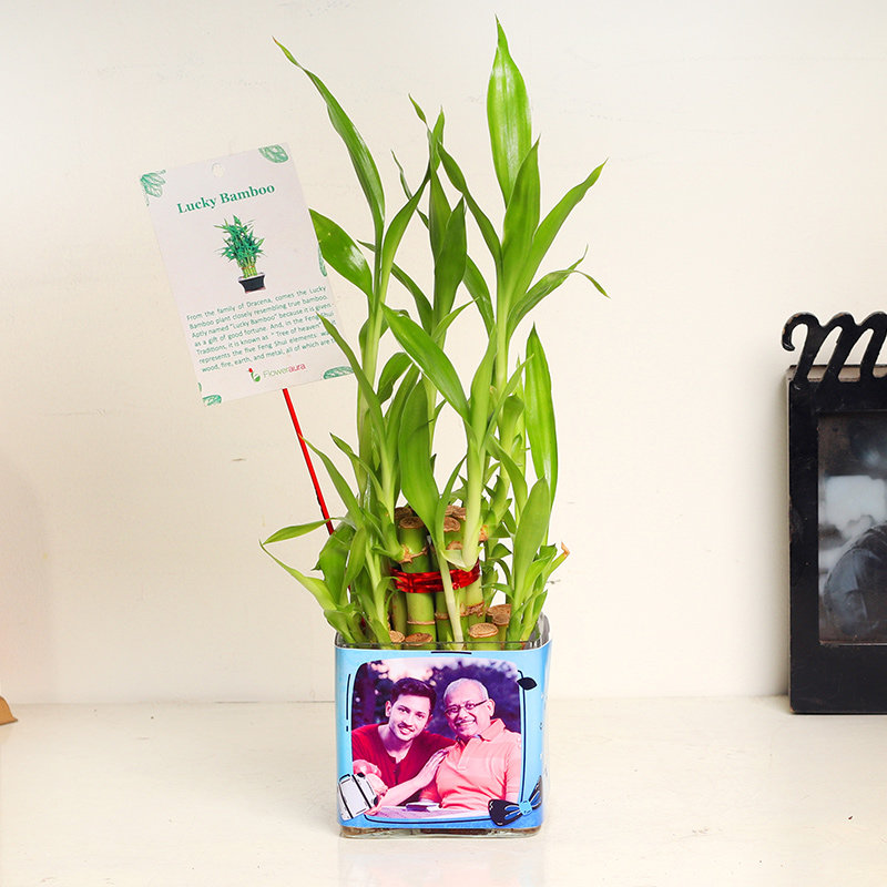 Lucky Bamboo Gift For Father's Day