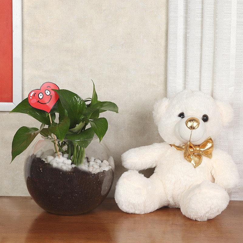 Happy Valentine Day Plant With Teddy