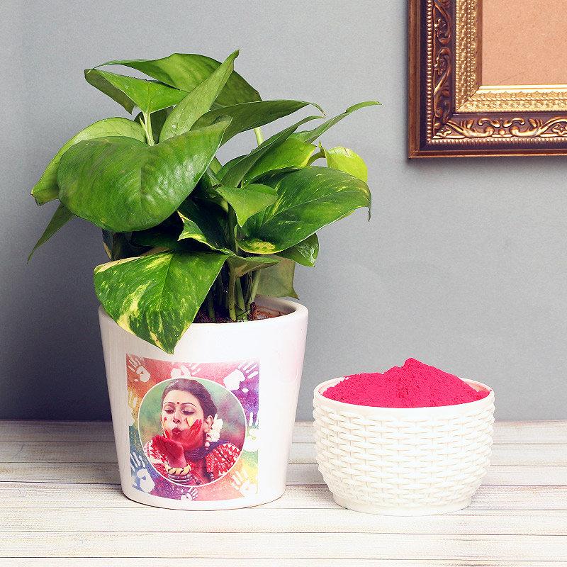 Personalised Money Plant for holi
