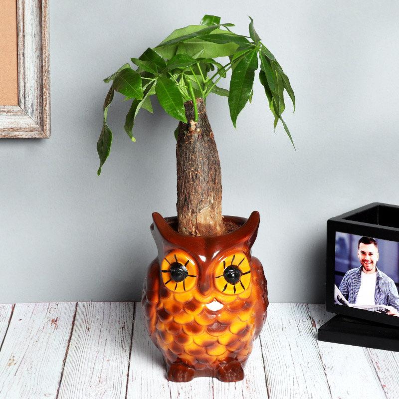 Lucky Money Tree In Owl Pot