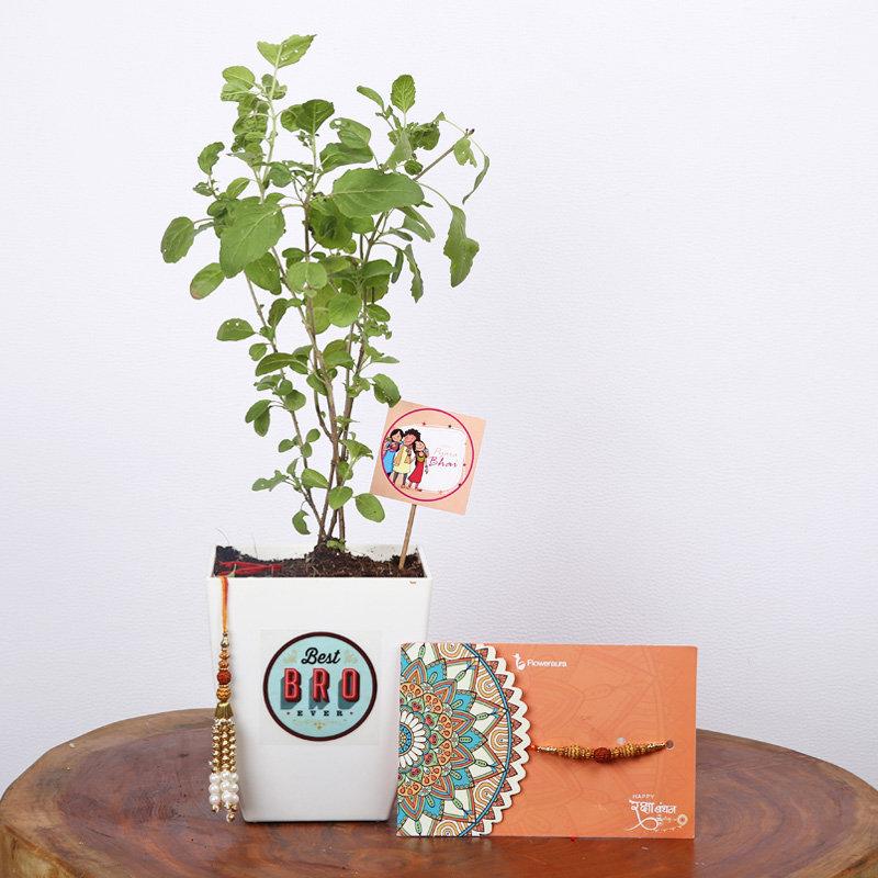 Lumba Rakhi Set With Tulsi Plant