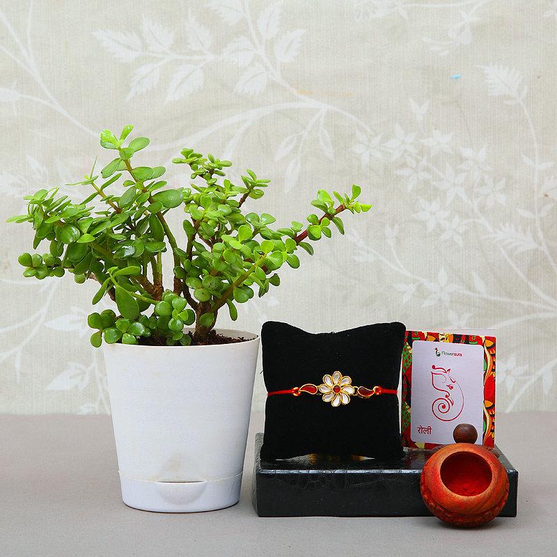Luxurious Plant And Rakhi Combo