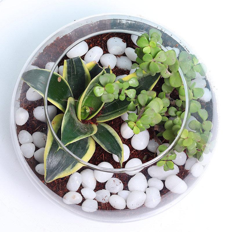 MILT and Jade Plants Online Terrarium