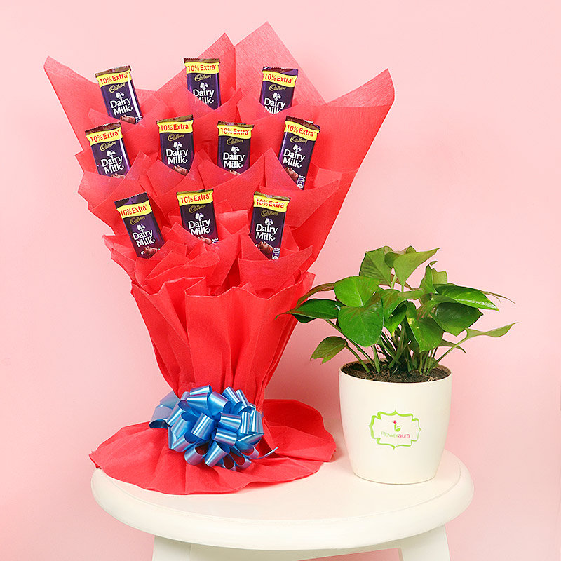 Money Choco Plant Combo - Good Luck Plant Indoors in Floweraura Chatura Vase with Bouquet of 10 Dairy Milk Chocolates