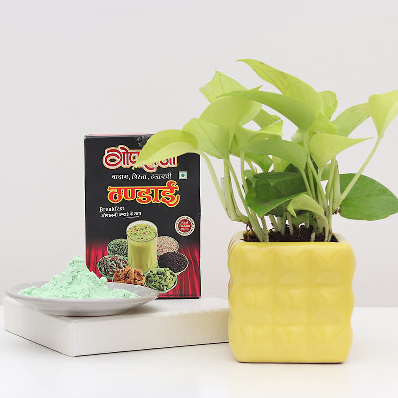 Money Plant and Holi Gift  Combos