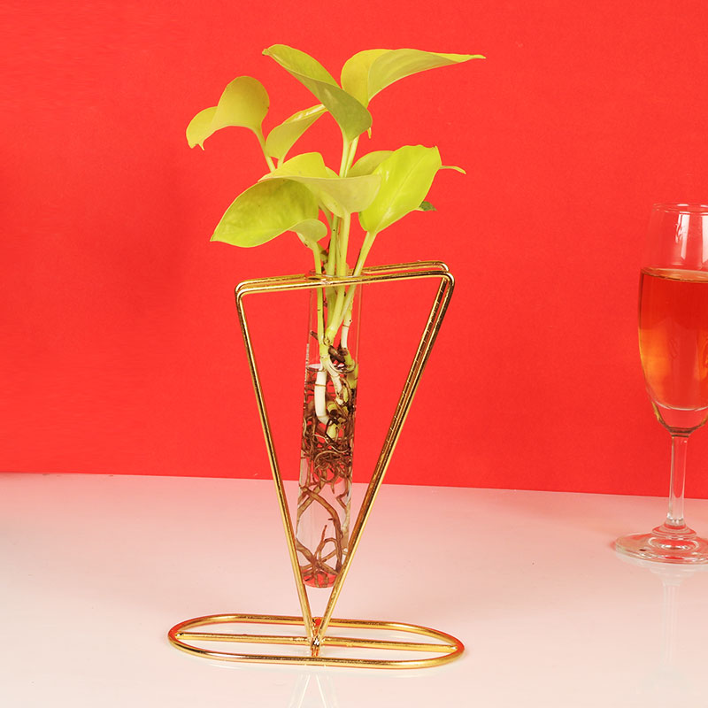 Money Plant In Triangle Single Tube Vase