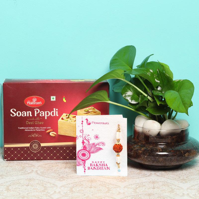 Money Plant Rakhi Combo