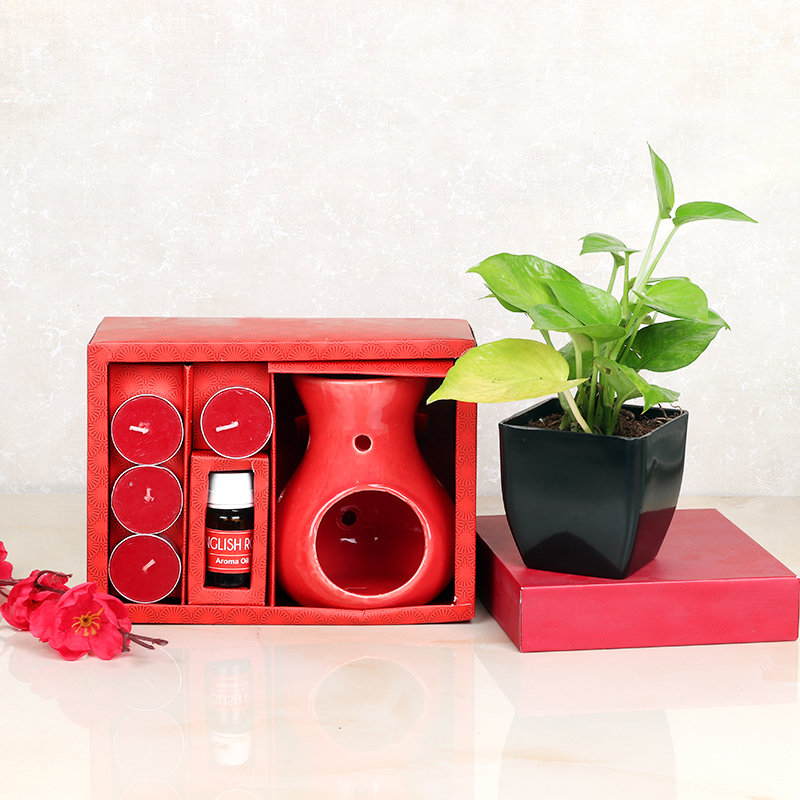 Money Plant With Aroma Candle Set