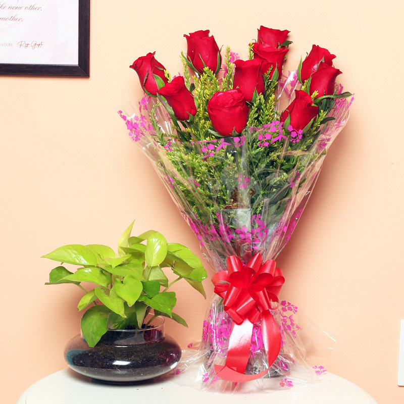 Money Plant With Roses - Good Luck Plant Indoors in Potpourri Vase with Bunch of 10 Red Roses