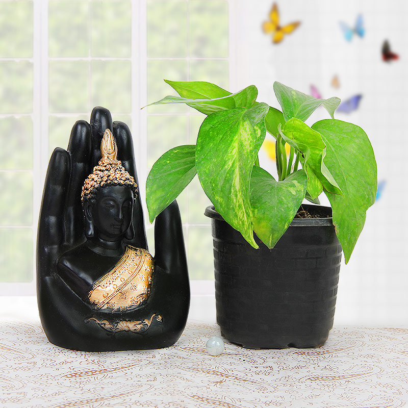 Green pothos plant and buddha statue combo
