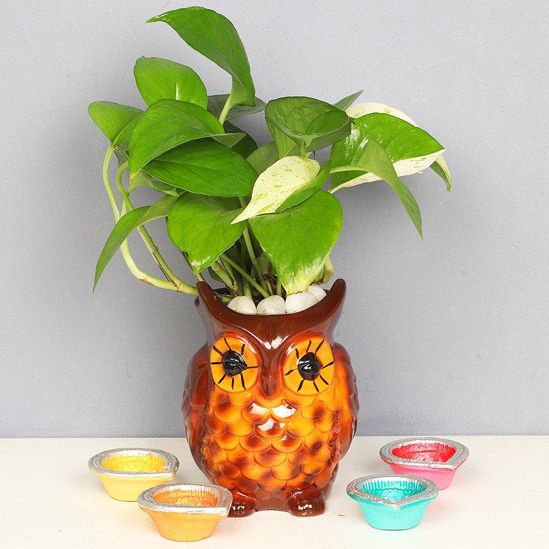 Night Owl Money Plant - Good Luck Plant Indoors in Designer Owl Vase with Set of 4 Diya